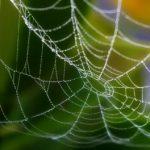 「夢の扉」を観て熱くなった。鋼鉄よりも強い「人工クモ糸」が世界を変えるかも