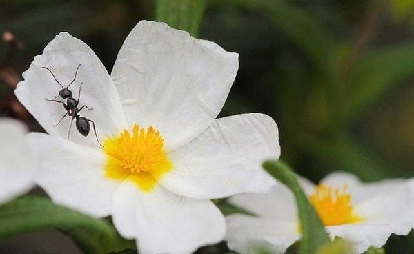 家にアリが大量発生時に使用した、効果のあったアリ駆除剤